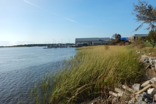Living shoreline of cordgrass and oyster reef at Pivers Island, Beaumont, North Carolina